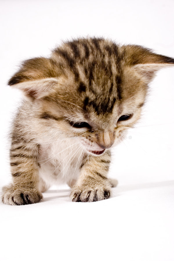 Free Cute Cat Royalty Free Stock Image - 2507066