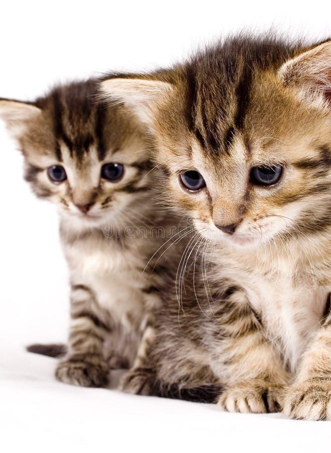Free Cute Cat Stock Image - 2507101