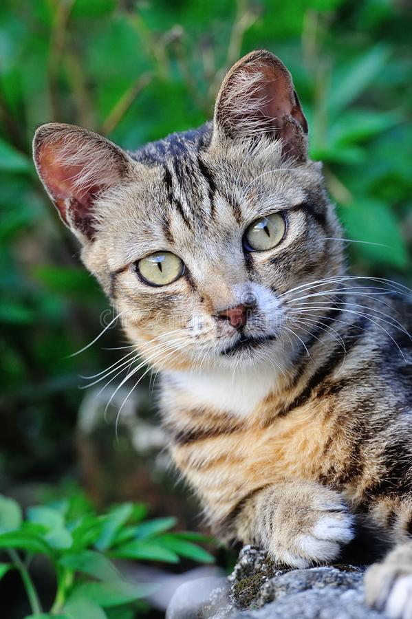 Cute Cat. Cute adorable alley cat portrait royalty free stock image