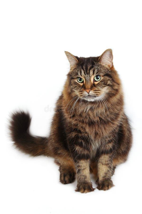 Free Cute Cat Royalty Free Stock Image - 368726