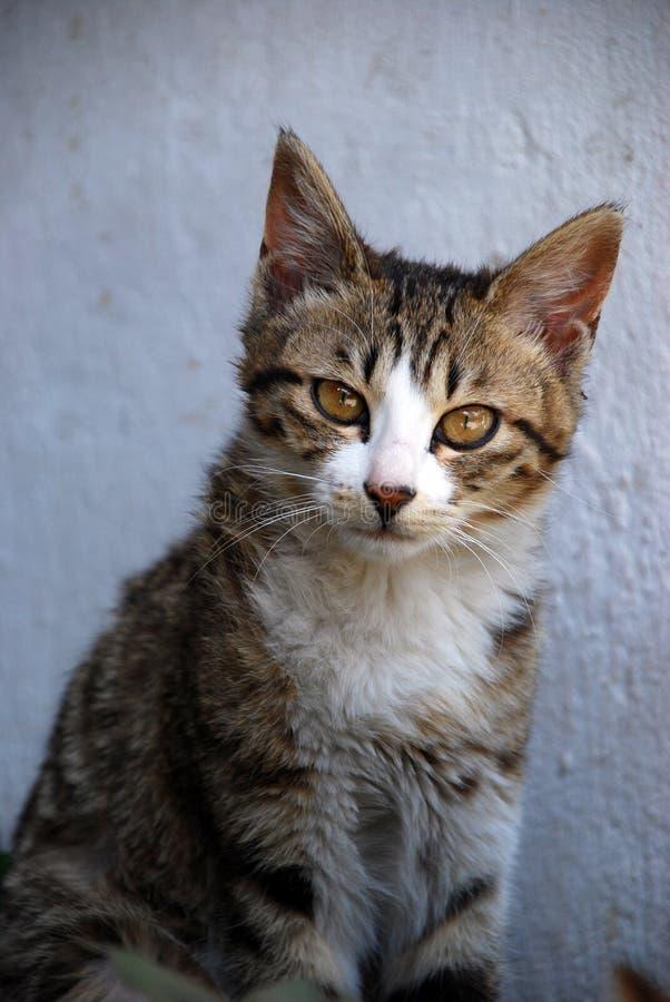 Download Cute Cat stock photo. Image of precious, long, domestic - 5193632
