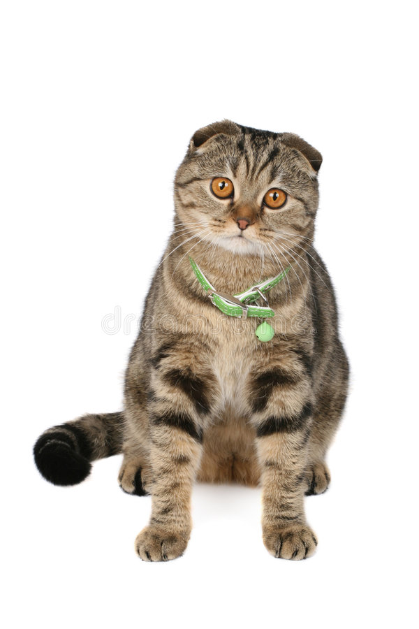 Cute cat. Isolated over white royalty free stock photo
