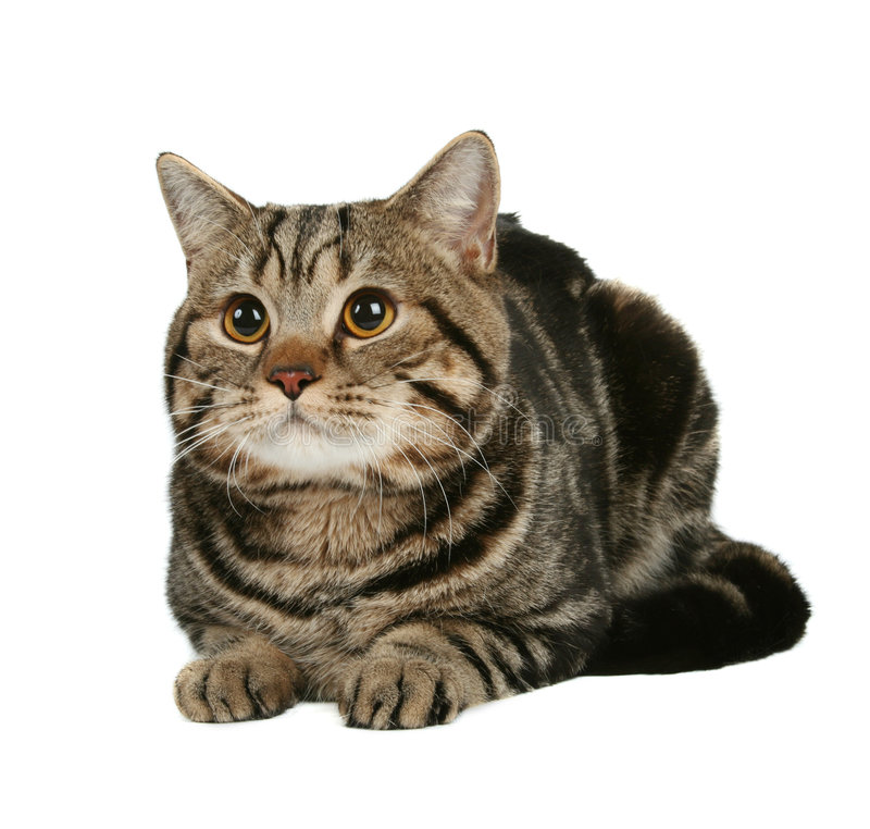 Cute cat. Isolated over white stock photos