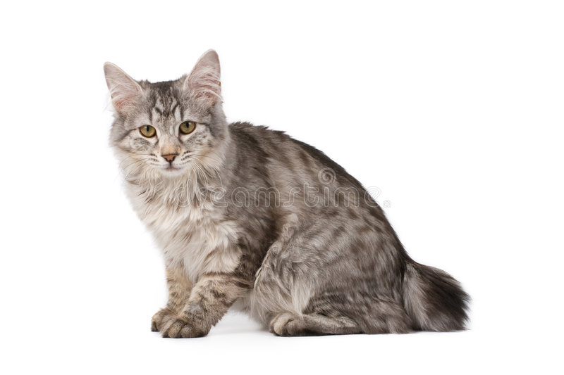 Cute cat. Isolated over white background royalty free stock image