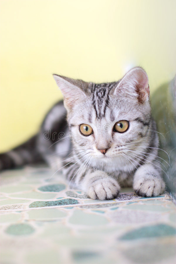 Download Cute cat stock image. Image of kitty, backgrounds, pets - 6171471