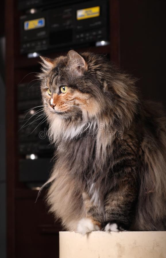Download Cute cat stock image. Image of breed, eyes, concern, mixed - 9702707