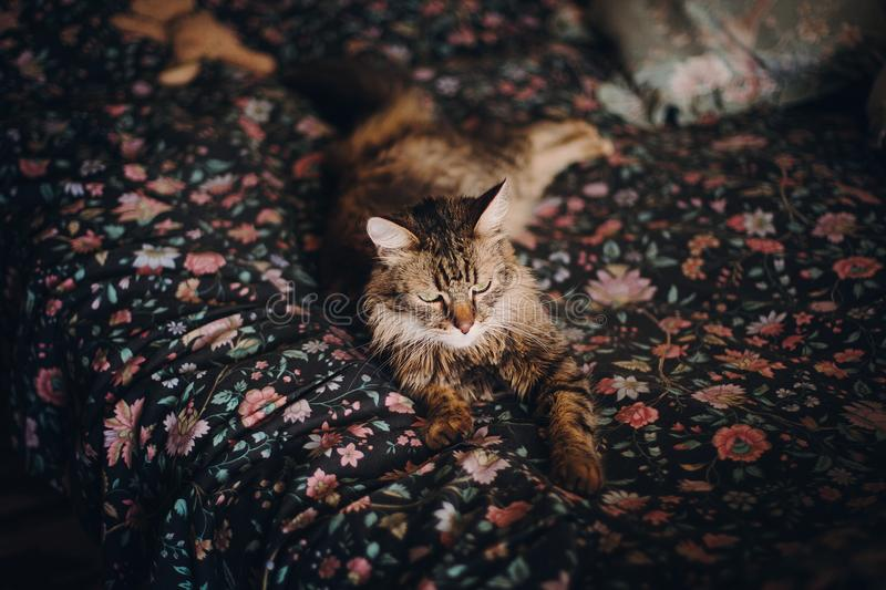Cute cat with amazing green eyes lying on floral bed sleeping, c stock photography