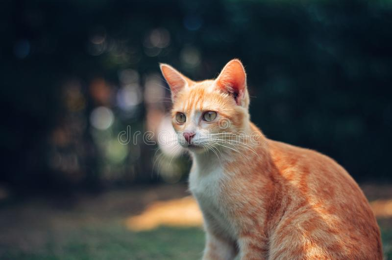 It is Cute Cat stock images