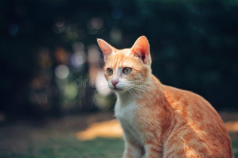 It is Cute Cat. Animal, orange, pet, pets, blur, bokeh stock images