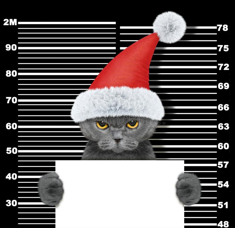 Cute cat as santa claus in prison. Isolated on black stock photos