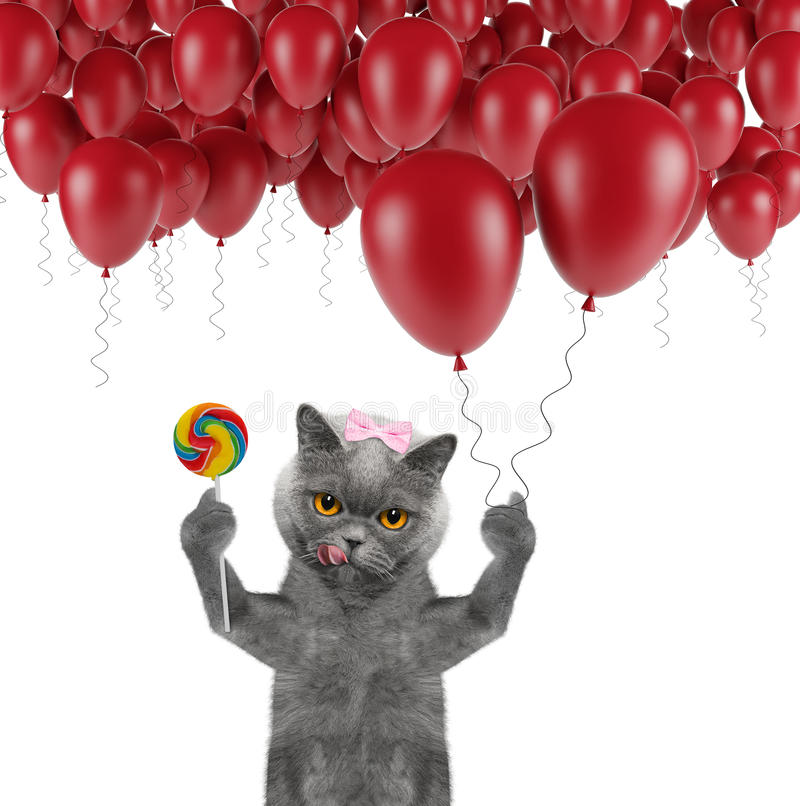 Cute cat with balloon and lollipop stock photo