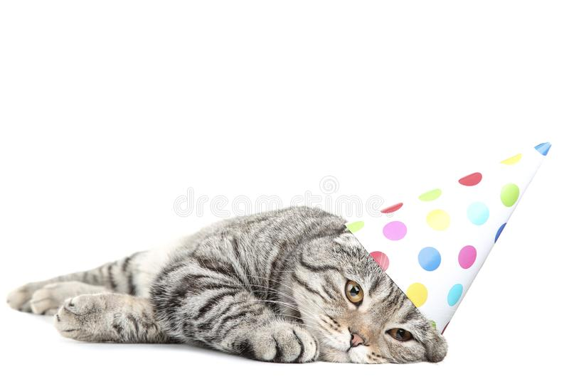 Cat with birthday cap. Cute cat with birthday cap lying on white background stock photo