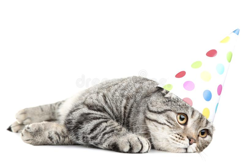 Cat with birthday cap. Cute cat with birthday cap lying on white background royalty free stock image