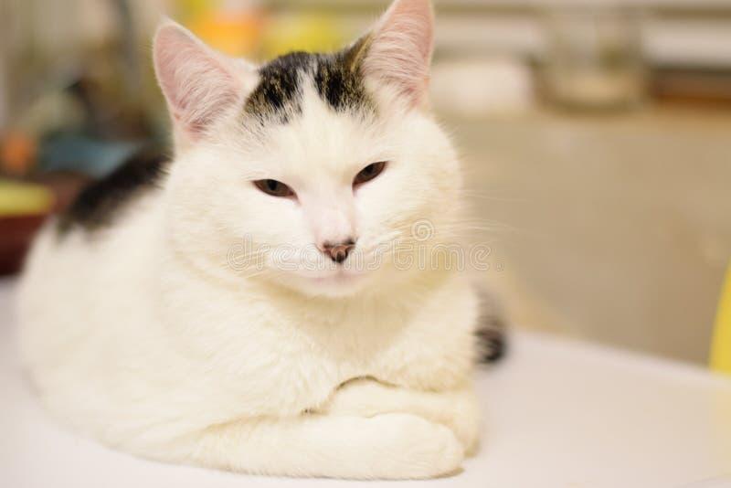 Cute cat black white stock photos