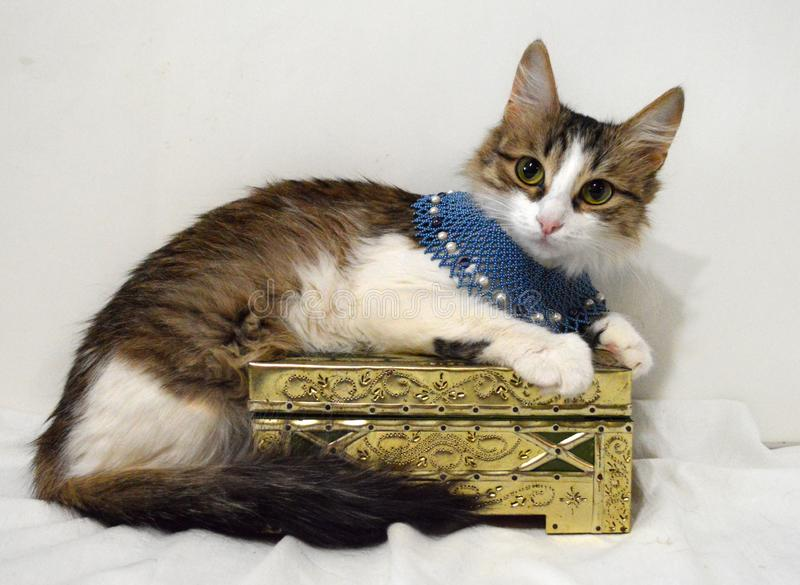 Cute cat on the box of golden color in blue handmade beaded necklace stock photos