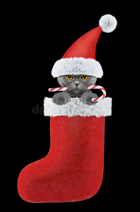 Cute cat with christmas candy in stocking. Isolated on black stock images
