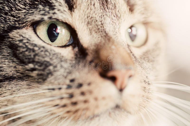 Cute cat close-up portrait. Focus on its magnetic eye. Adorable kitten series royalty free stock photography