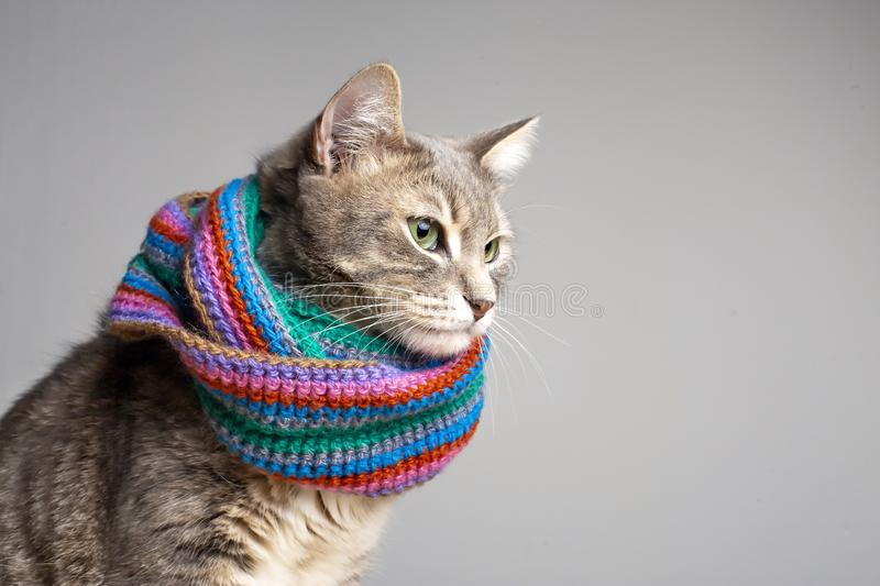 Cute cat in colored knitted scarf ready for the cold autumn and winter, sad look in sroronu beautiful, green eyes, with stock photo