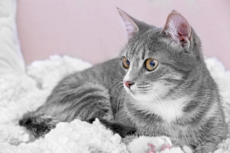 Cute cat on couch. At home stock images
