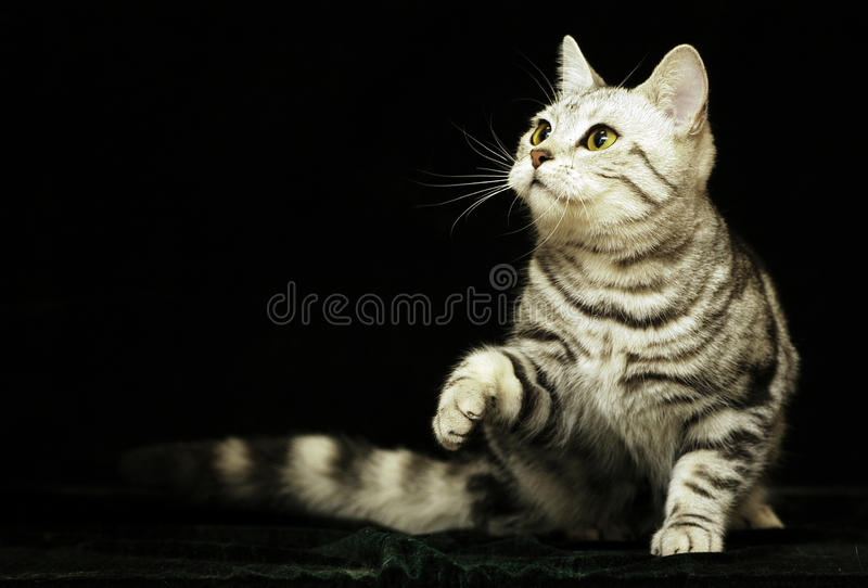 Download Cute cat in the dark stock photo. Image of hair, fluffy - 18920276