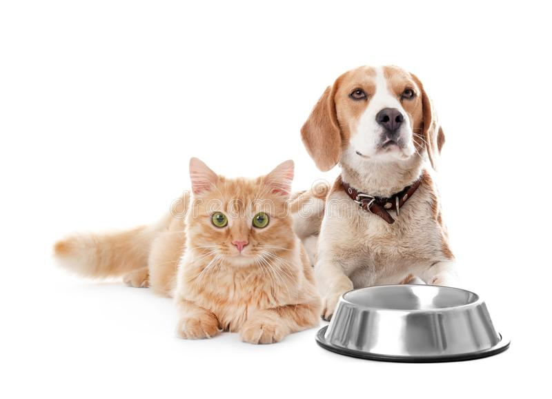 Cute cat and dog together on white background stock images