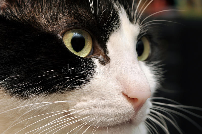 Download Cute cat face stock image. Image of black, eyes, white - 23168817