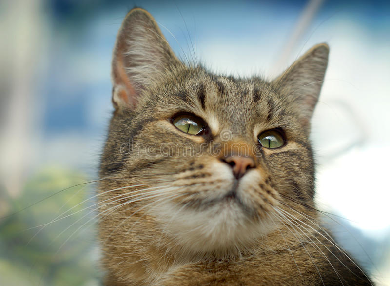Download Cute cat face stock photo. Image of head, whisker, hair - 24497986