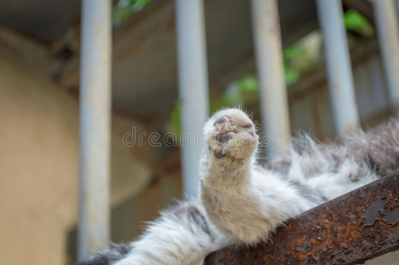 Cute Cat feet. To give a cat feet a close-up on stair royalty free stock photography