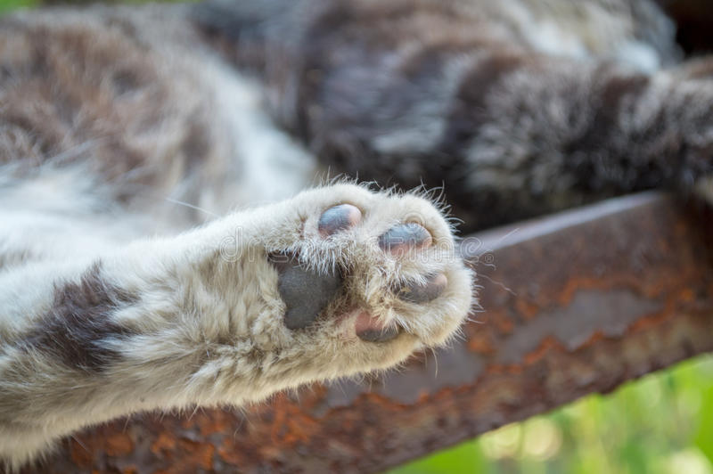Cute Cat feet. To give a cat feet a close-up on stair stock photo