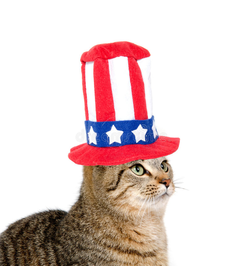 Cute cat with Fourth of July hat stock image