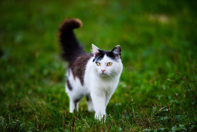 Cute cat on green grass stock photos