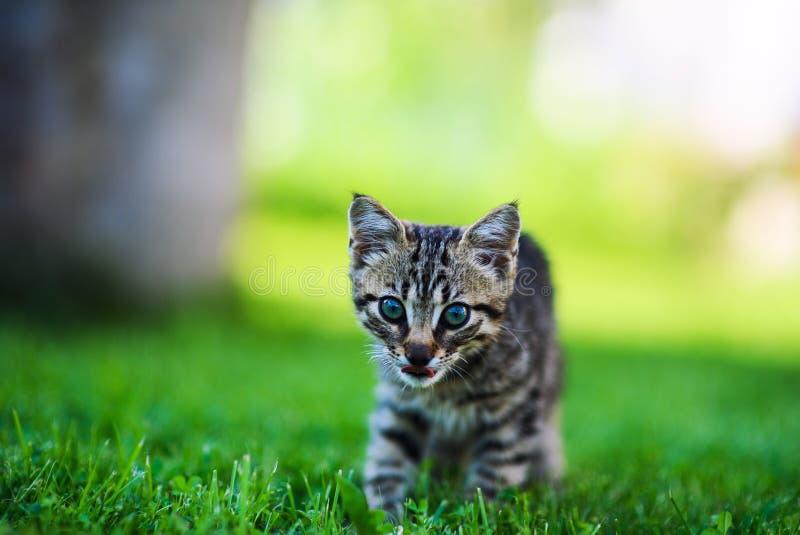 Cute cat on green grass stock photo