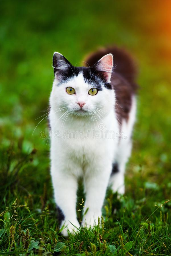 Cute cat on green grass royalty free stock photography