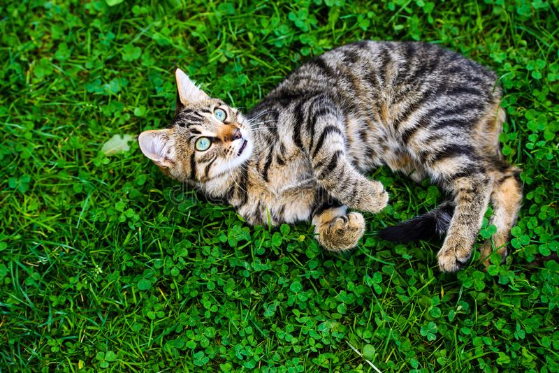 Cute cat on green grass royalty free stock image