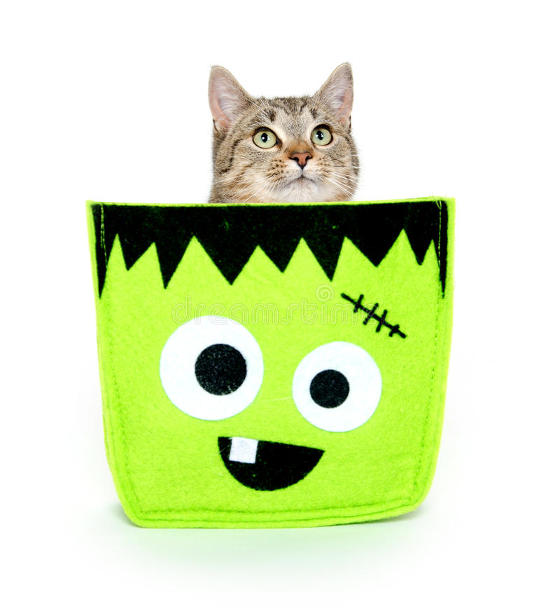 Cute cat in Halloween bag stock photos