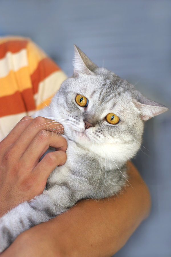 Download Cute Cat In The Hand Stock Photos - Image: 6184163