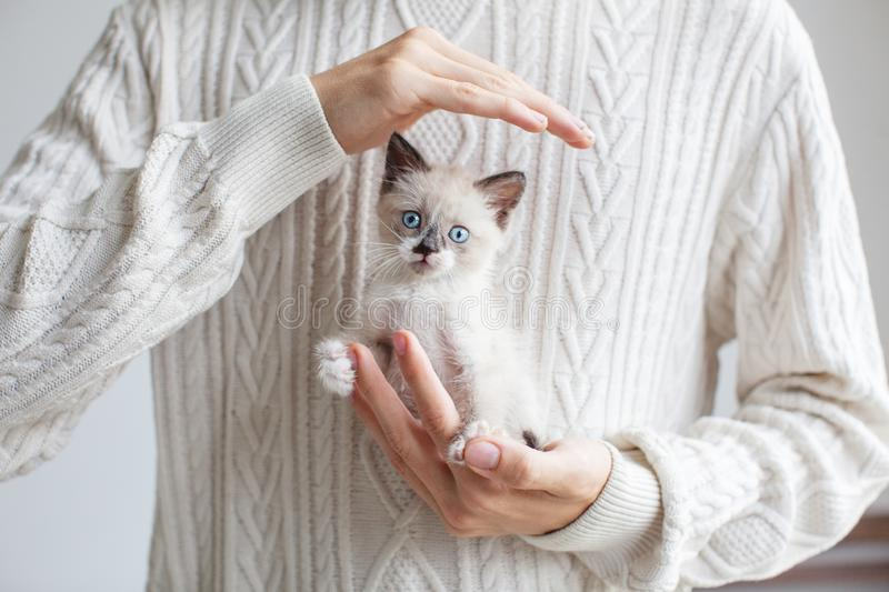 Cute cat in hand young man. Little kitten with teen stock image