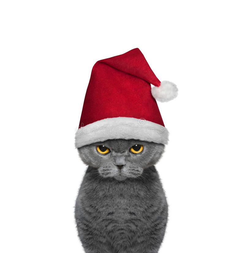 Cute cat in a hat of Santa Claus stock photos