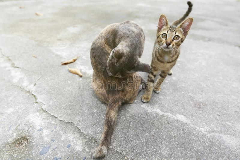 Cute cat at home. Cat kitten looking at me when i focus my camera royalty free stock images