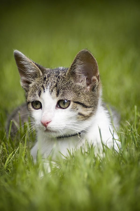 Free Cute Cat In The Grass Royalty Free Stock Photo - 12137755