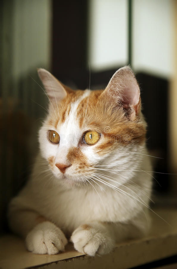 Cute cat indoor royalty free stock photography