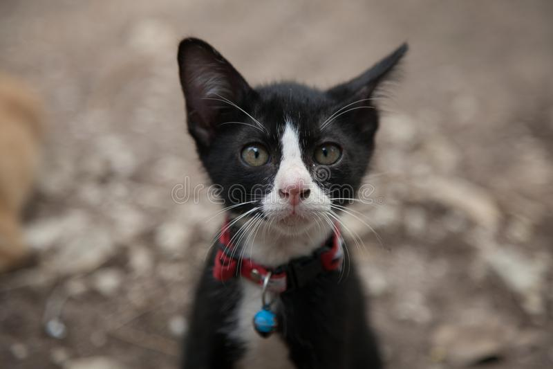 Cute cat kitten black white royalty free stock images