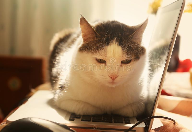 Cute cat lay resting on laptop keyboard. On the table funny photo