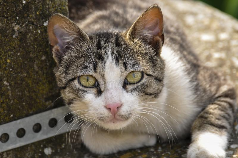 Cute cat lie down on the concrete. Lazy cat sit on concrete. Portrait of cat on the ground stock images