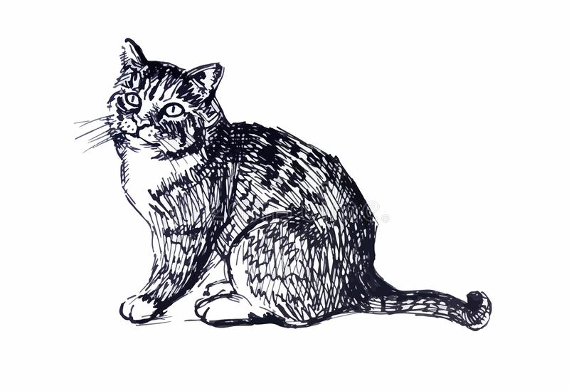 Cute cat. Line drawing royalty free stock images