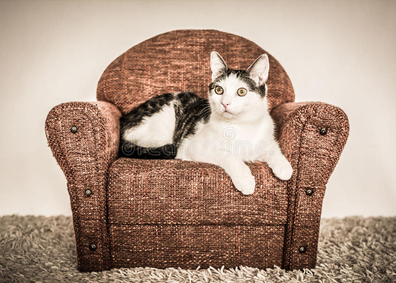 Cute cat lying on little armchair. royalty free stock photography