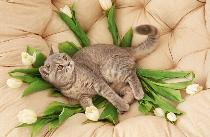 Cute cat lying in lounge armchair royalty free stock photography