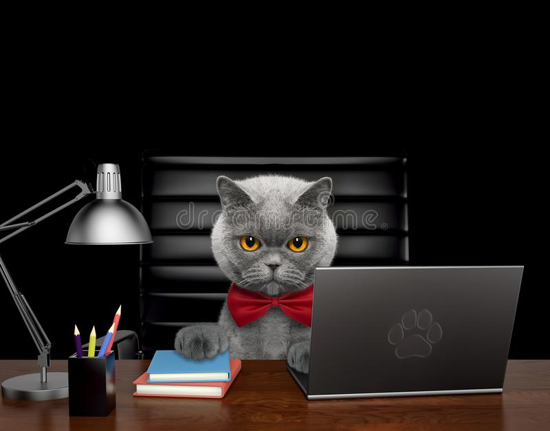 Cute cat manager is doing some work on the computer. Isolated on black. Background stock illustration
