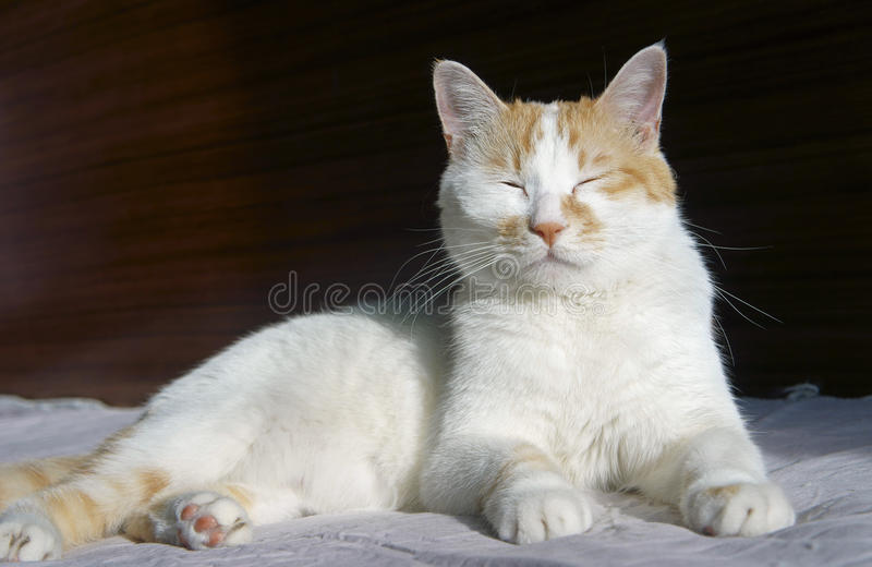 Cute cat nap stock images