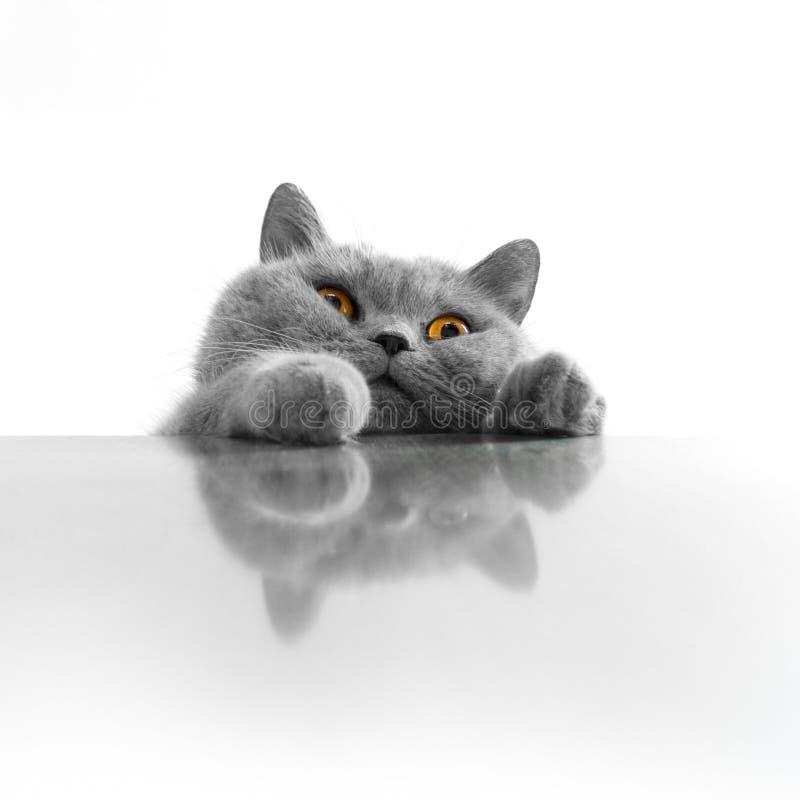 Cute Cat Peeking Stock Photography